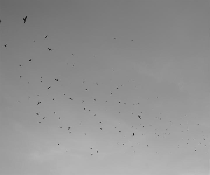 http://yannh.ch/files/gimgs/37_oiseaux01new.jpg