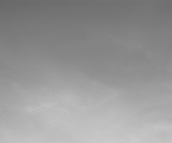 http://yannh.ch/files/gimgs/37_oiseaux02new.jpg